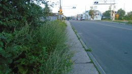 Mauvaises herbes sur trottoir