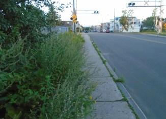 Horribles mauvaises herbes