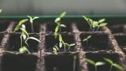 Pousses de plantes