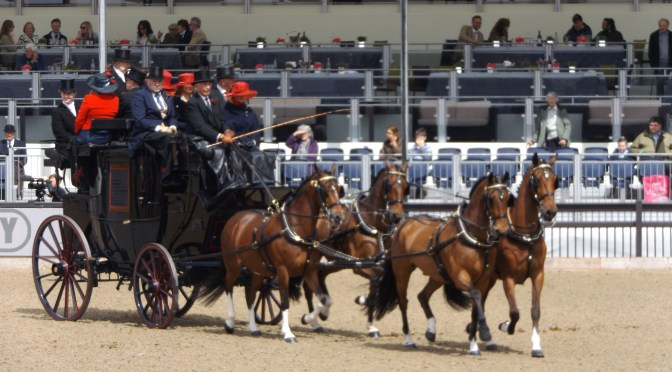Coaching, driven dressage and private driving