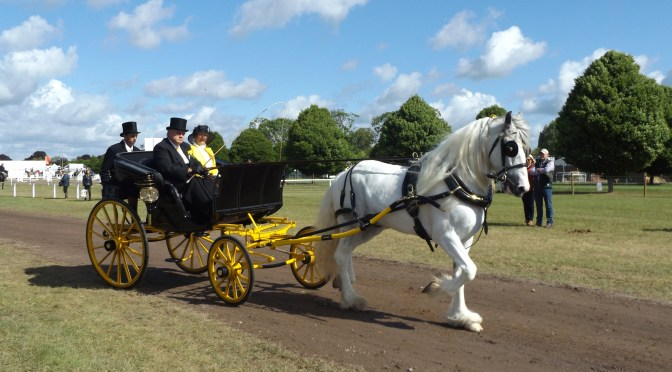 Travel with the CAA to the 2018 Royal Windsor Horse Show!