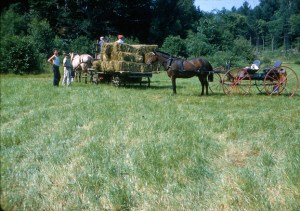 Making hay with horses