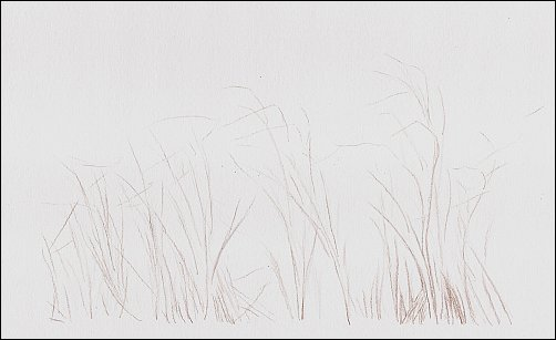 Drawing Autumn Grass in Colored Pencil - Step 1