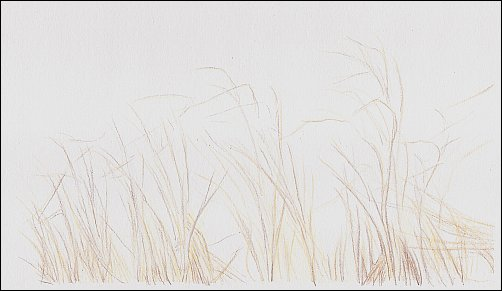 Drawing Autumn Grass in Colored Pencil - Step 2
