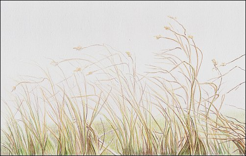 Drawing Autumn Grass in Colored Pencil - Step 5