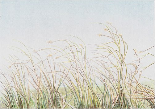 Drawing Autumn Grass in Colored Pencil - Step 7
