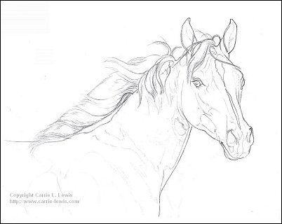 Direct Drawing Tutorial - Palomino Horse - Line Drawing Step 3