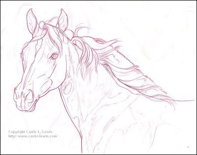 Direct Drawing Tutorial - Palomino Horse - Line Drawing Step 4