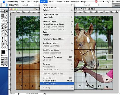 Putting a Drawing Grid on a Digital Photo - Step 8