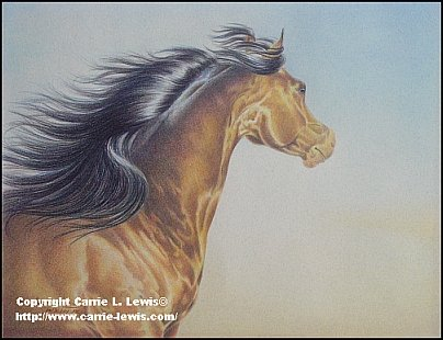 Original colored pencil drawing of an Arabian horse by Carrie L. Lewis