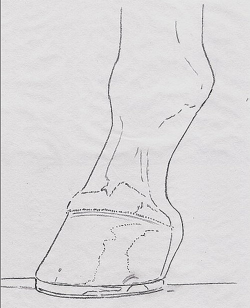 How to Draw a Horse Hoof - Step 3