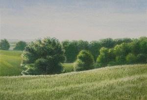 Landscape Study Flint Hills Spring