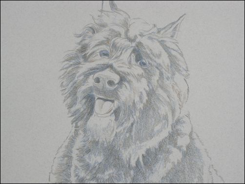 How to Draw a Dog in Colored Pencil Part 2 - Dark Brown Layer Detail 1