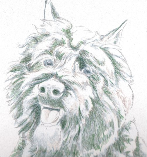 How to Draw a Dog in Colored Pencil Part 2 - Dark Green Layer Detail 1