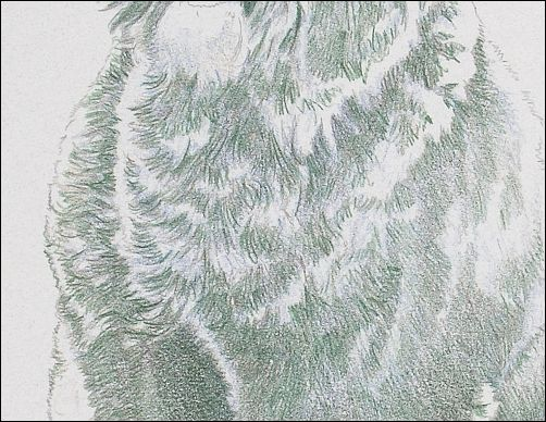 How to Draw a Dog in Colored Pencil Part 2 - Dark Green Layer Detail 2