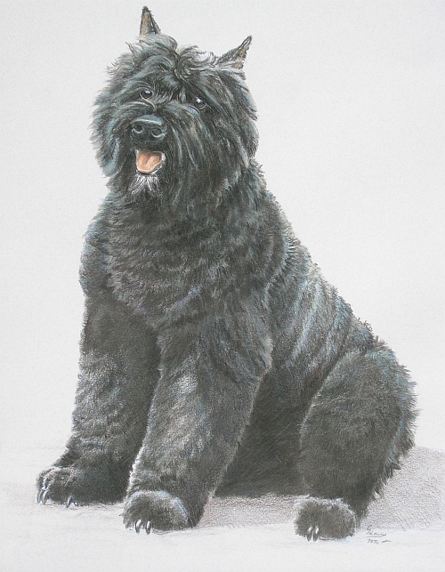 How to Draw a Dog with Colored Pencils Finished