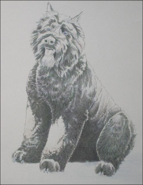 How to Draw a Dog in Colored Pencils Part 3 - Black Grape Layer