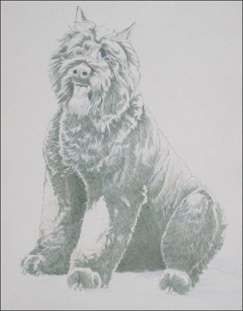 How to Draw a Dog in Colored Pencils Part 3 - End of Part 2