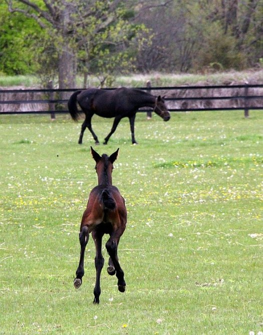 Race Horses and Artists - The Baby Race Horse Alone with its Mother