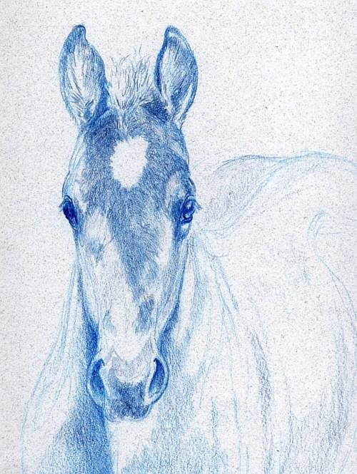 Do I Need a Full Set of Colored Pencils - Foal Study