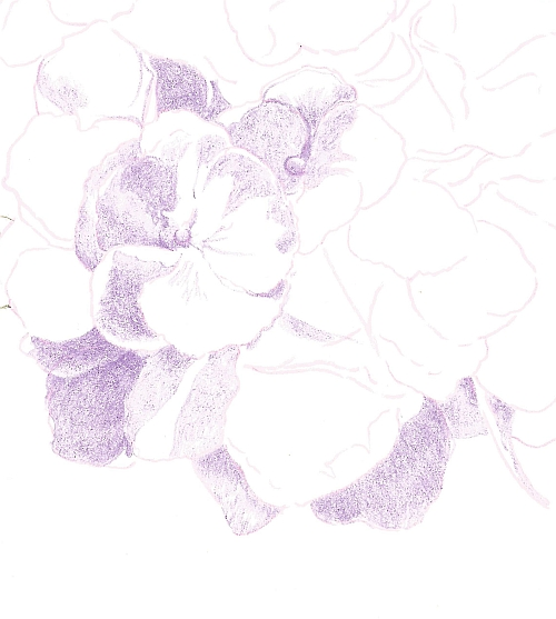 How to Draw Complex Flowers - First Color Violet