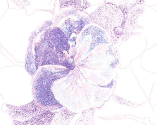 How to Draw Complex Flowers - Step 6