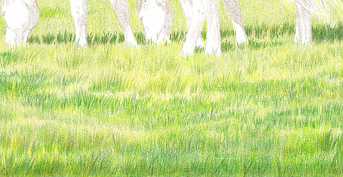 How to Draw Summer Grass Step 06