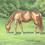8 Drawing Mini Clinics - How to Draw a Horse using a Complementary Under Drawing