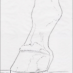 8 Drawing Mini Clinics - How to Draw a Standing Hoof