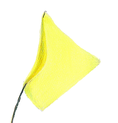 How to Make Your Subject Stand Out - Yellow Flag 1