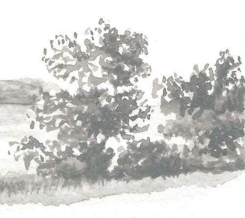 Weekly Drawing Week 2 - Small Tree Detail