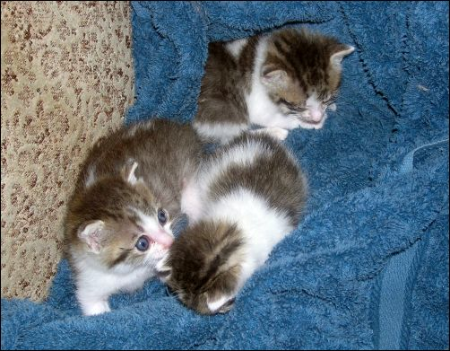 How the Kittens are Doing - The First Three Kittens