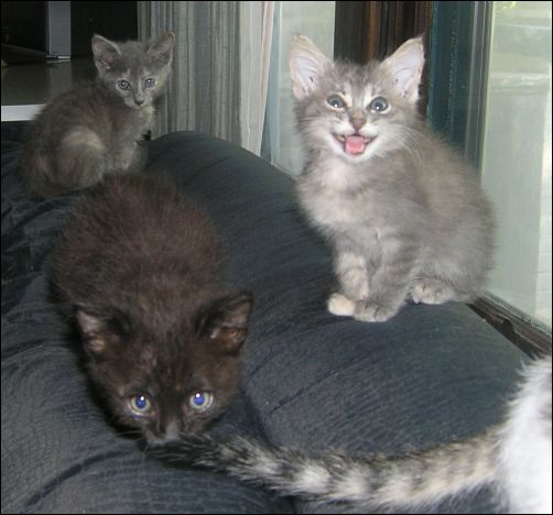 More Kittens, More News - The Newcomers