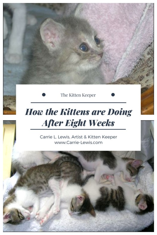 How the Kittens are Doing after Eight Weeks