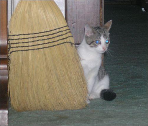 Kitten Update - Bing and the Broom
