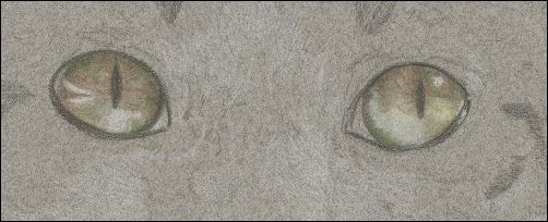 How to Draw Cat Eyes - Step 5b