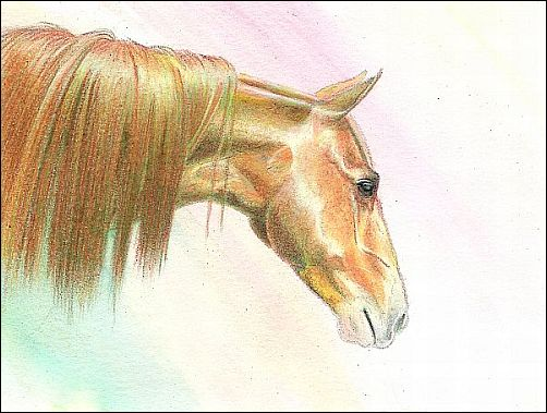 How to Finish a Drawing Started with Water Soluble Colored Pencils - Step 2b