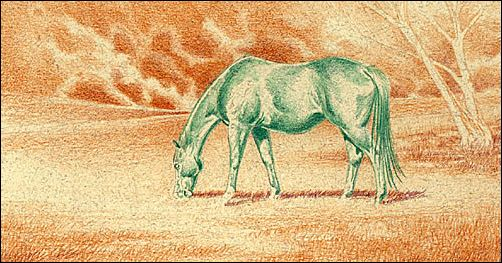 Draw a Horse Using the Complementary Under Drawing Method - Step 2