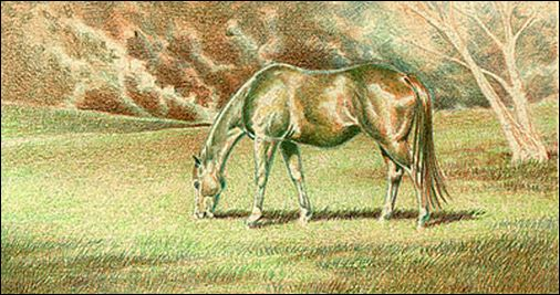 Draw a Horse Using the Complementary Under Drawing Method - Step 4