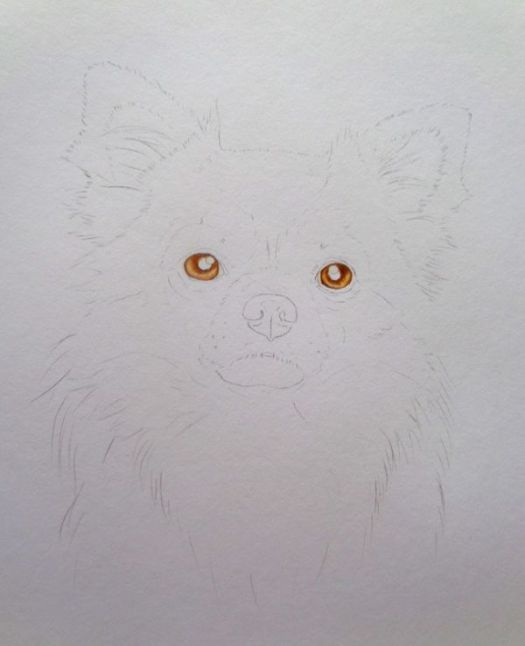 How to Draw a Long Haired Dog Step by Step Step 2: Blocking in the Eyes