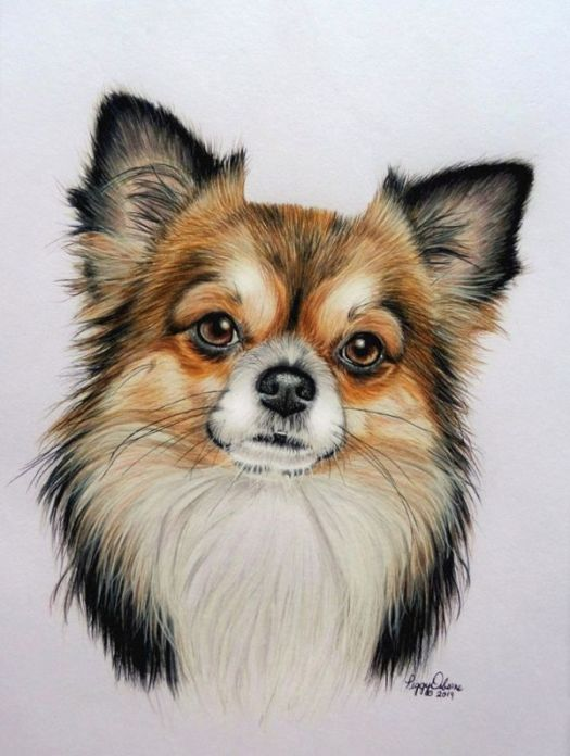 How to Draw a Long Haired Dog Step by Step: The Finished Portrait
