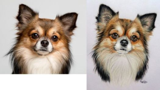 How to Draw a Long Haired Dog Step by Step Color Comparison