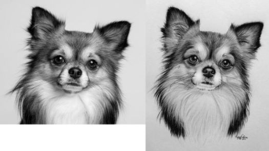 How to Draw a Long Haired Dog Step by Step Value Comparison