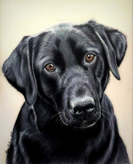 How to Draw Black Fur - The finished portrait.