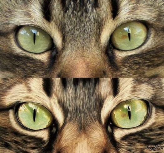 How to Draw Cat Eyes - Color Side-by-Side Comparison