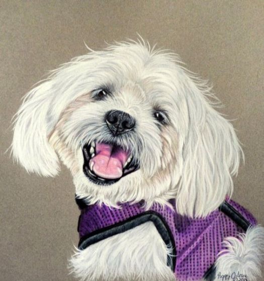 How to Draw White Fur - The finished portrait
