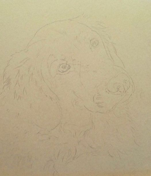 How to draw a Golden Retriever beginning with a detailed line drawing.