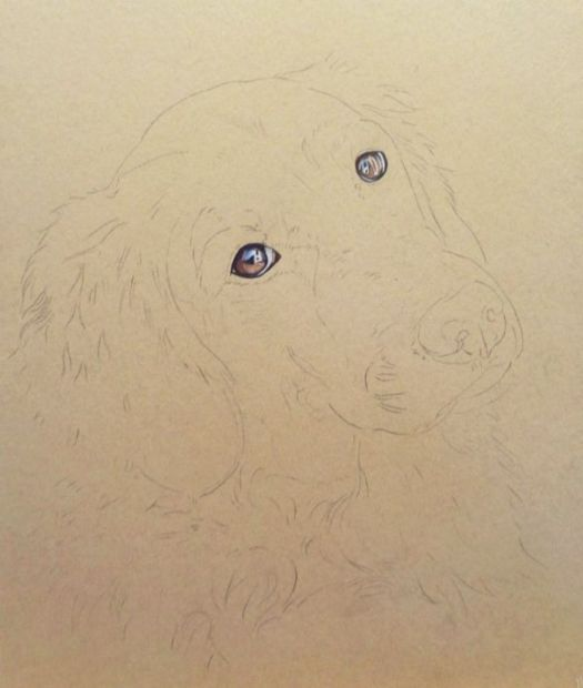 How to draw a Golden Retriever. Get the eyes right and the portrait is more likely to succeed.