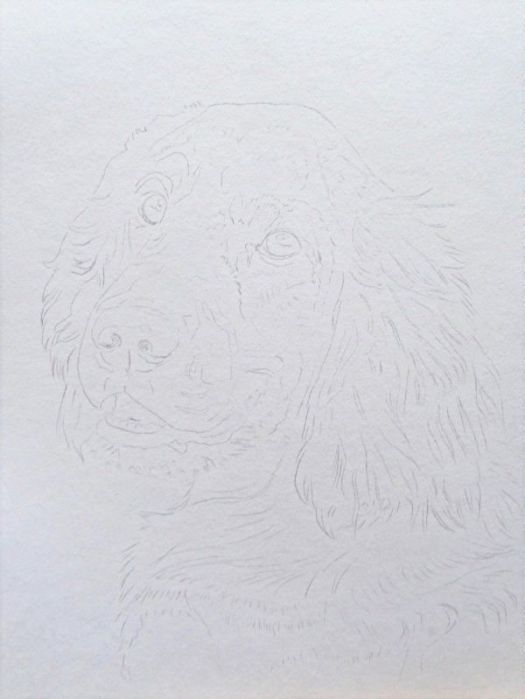 The line drawing for how to draw an Irish Setter