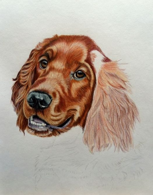 How to Draw an Irish Setter